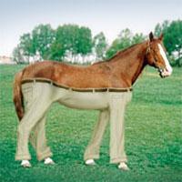 horse_wearing_pants